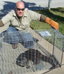 River otter trapping and removal in largo Clearwater seminole