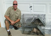 Raccoon and Opossum trapped by Dave Lueck